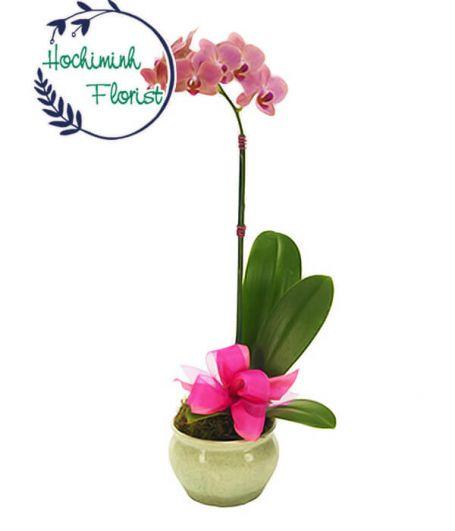Elegant Purple Orchid In A Vase