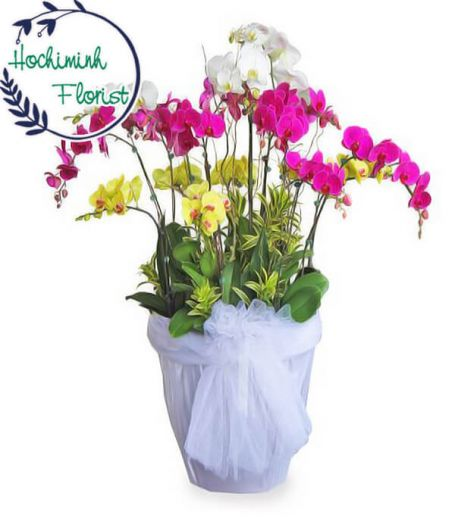 Mixed Orchid In A Vase