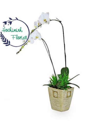 Blessing White Orchid