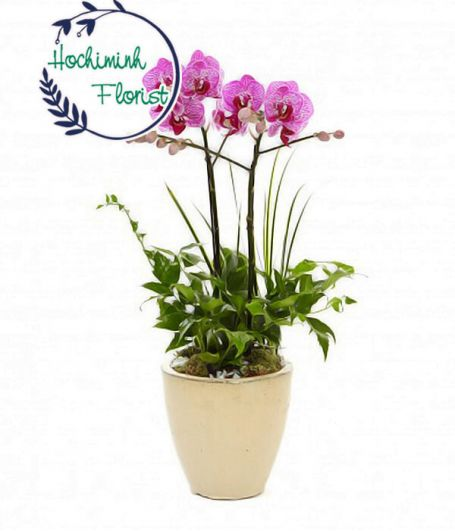 Purple Orchid In A Vase