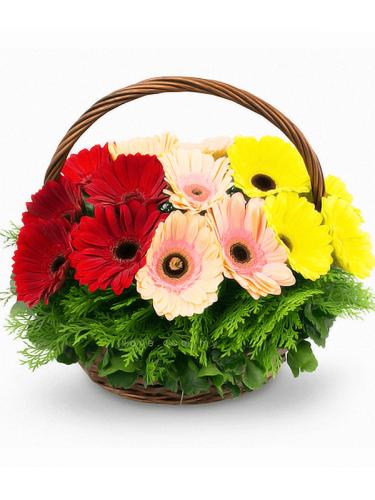 2 Dozen Mixed Gerberas In A Basket